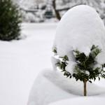 20090212110053_004 snowflower-2 jan2009 (pixelpost)