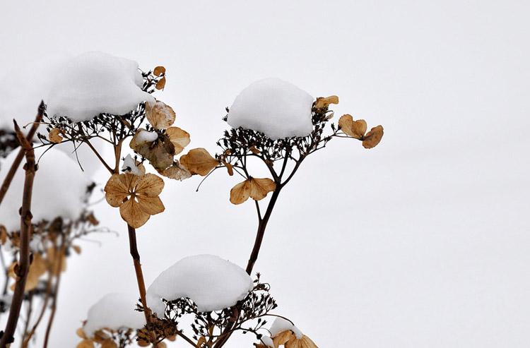 20090212110157_003 snowflower-1 jan2009